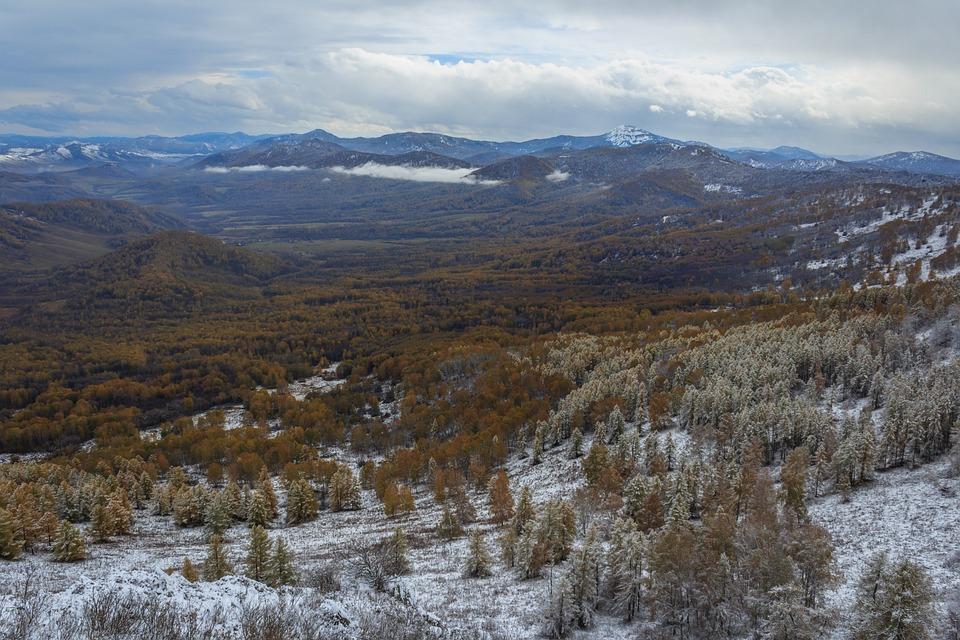 Pine, Efi, Birch, Forest, Snow, Winter, Mountains