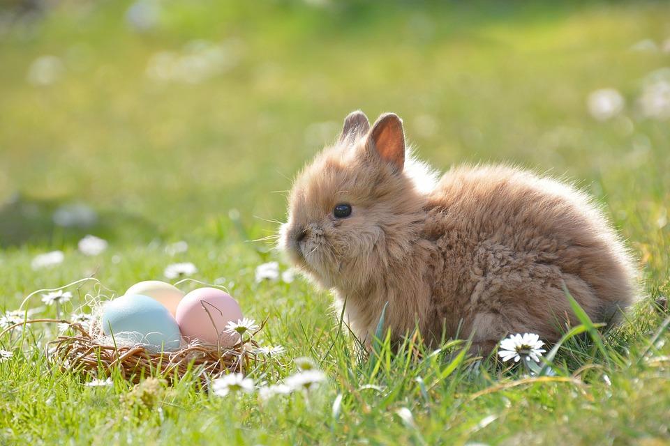 Easter, Easter Bunny, Egg, Easter Eggs, Happy Easter