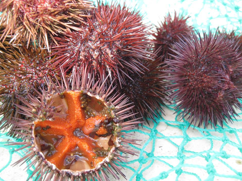 Sea urchins mouth