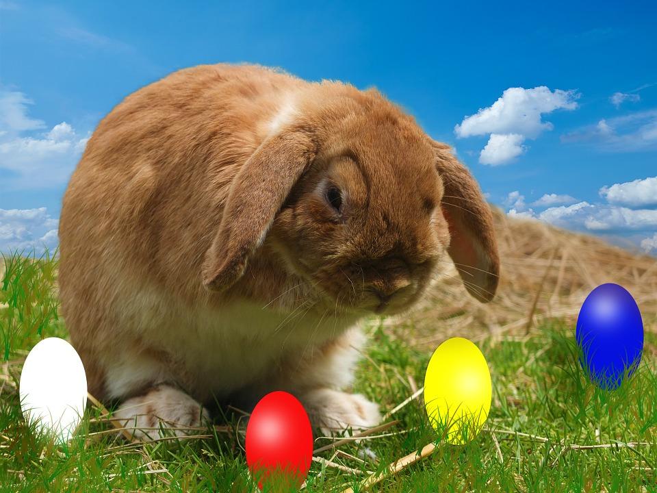 Hare, Egg, Sky, Easter, Easter Eggs