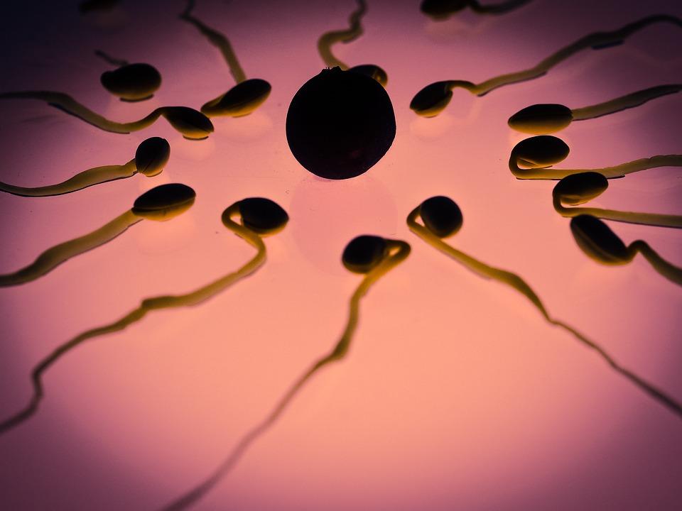 Vida de un espermatozoide