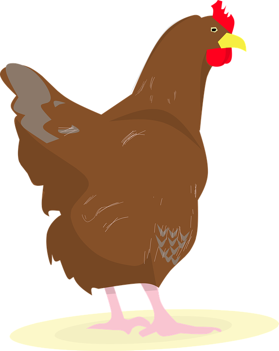 Chicken, Rooster, Eggs, Chick, White Hen, Hens Party