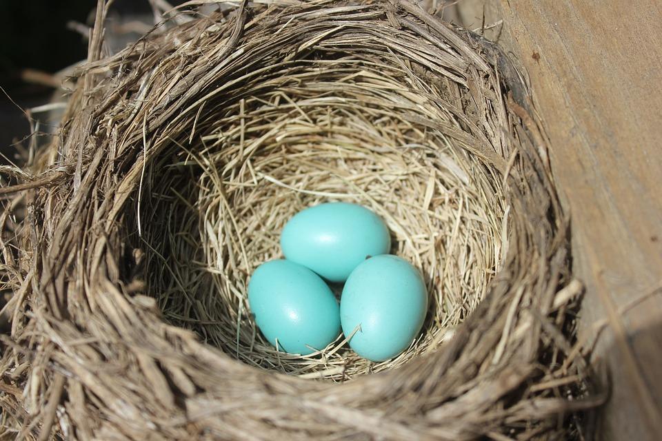Robin, Bird's Nest, Nest, Eggs