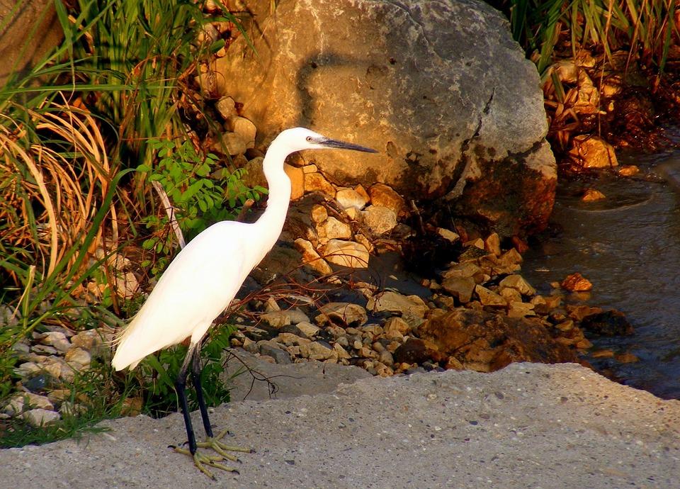 Birds, Egret, Lake, Shadow