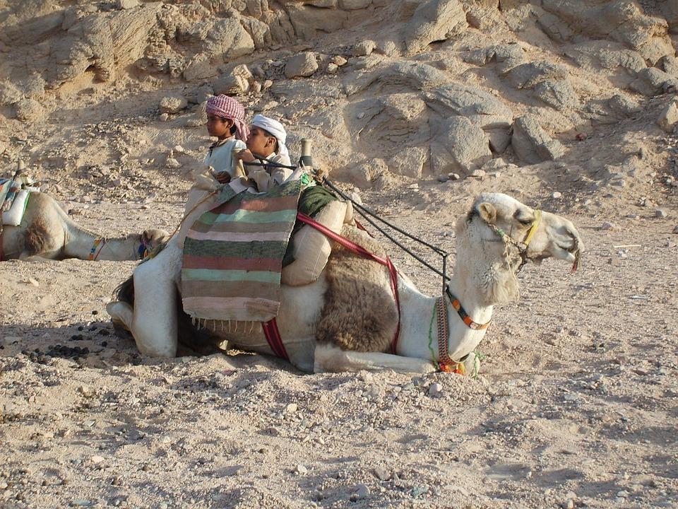 Camel, Desert, Mountain, Baby, Egypt, Hot, Hurghada