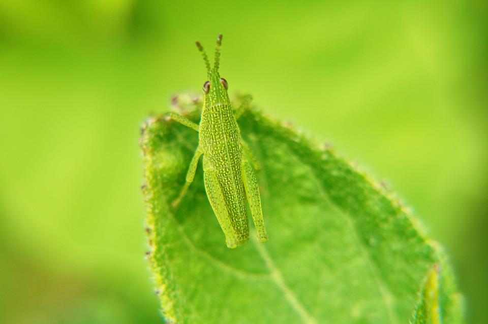 Macro, Macro Photography, Insects, Garden, El Salvador