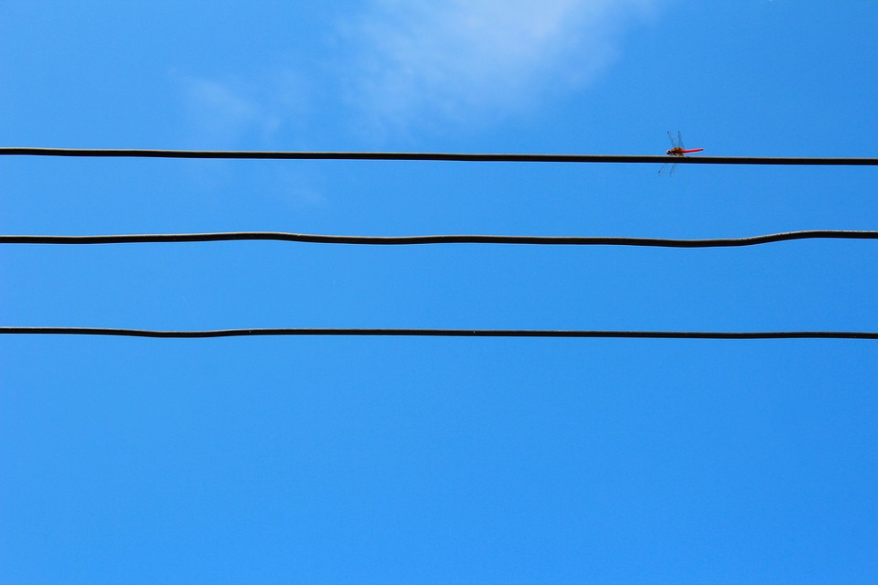 Dragonfly, Power Line, Electricity, Line, Current