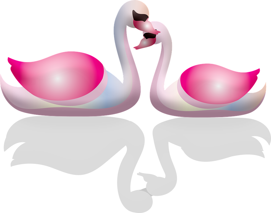Swans, Valentine's Day, Pink, Elegant, Nature, Water