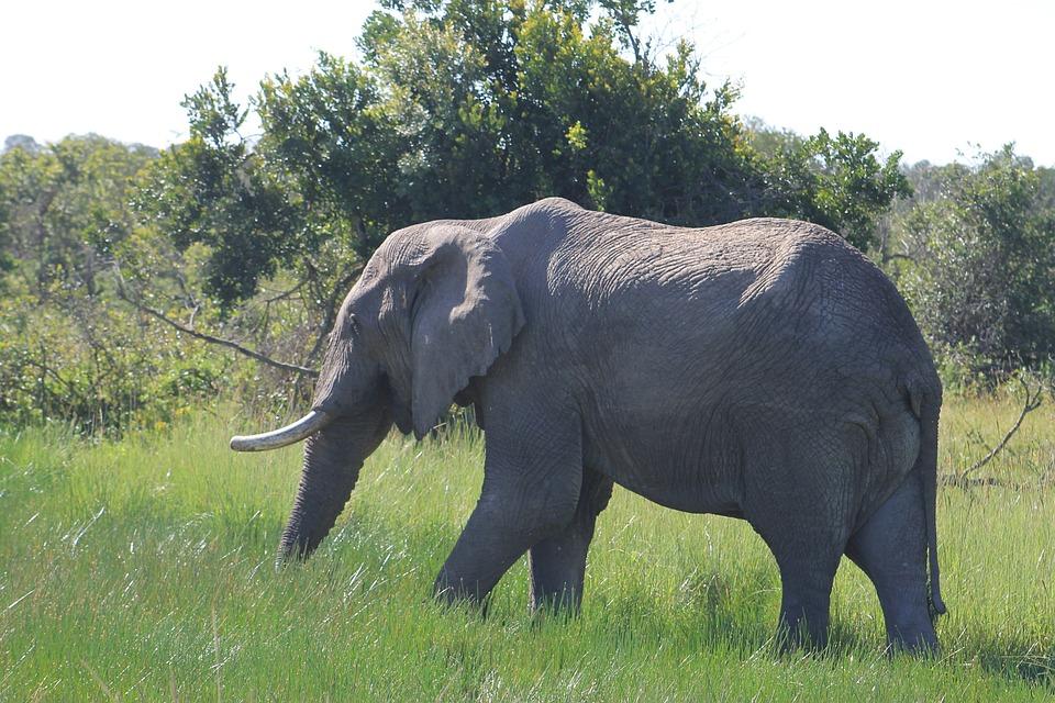 Elephant, Eating, Wildlife, Africa