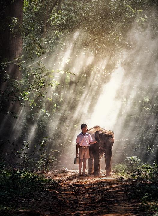 Boys, Kids, Elephant, Animals, Asia, Large, Bright
