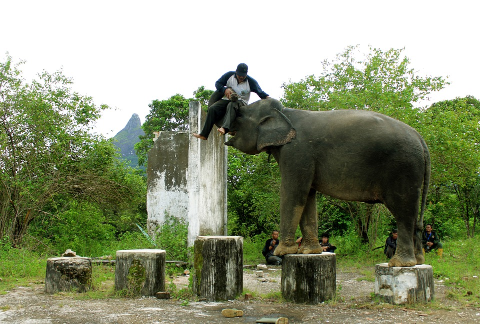 Elephant, Lahat, Indonesian, Animals, Nature