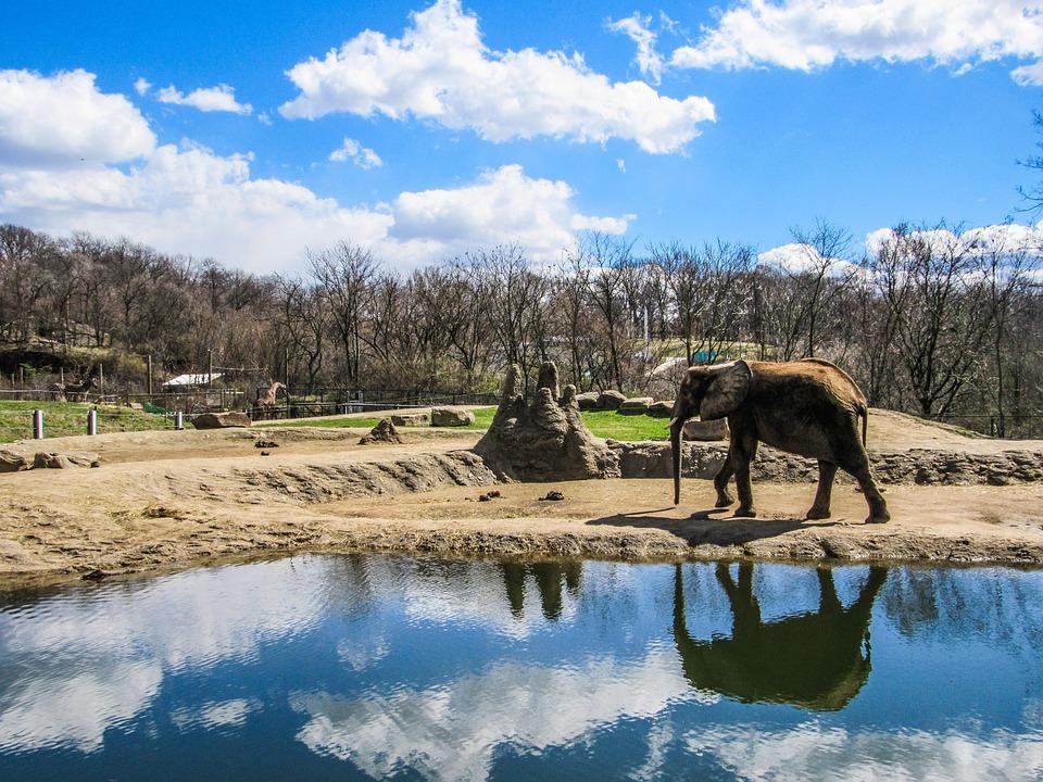 Elephant, Zoo, Animals, Zoo Animals