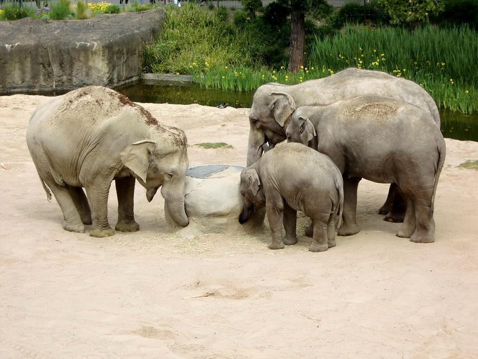 Elephant, Elephant Family, Baby Elephant, Animals