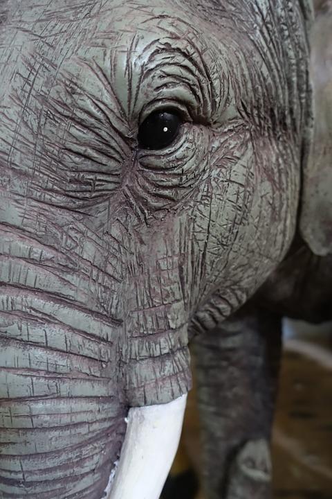 Elephant, Eye, Head, Face, Wrinkled, Wildlife, Animal