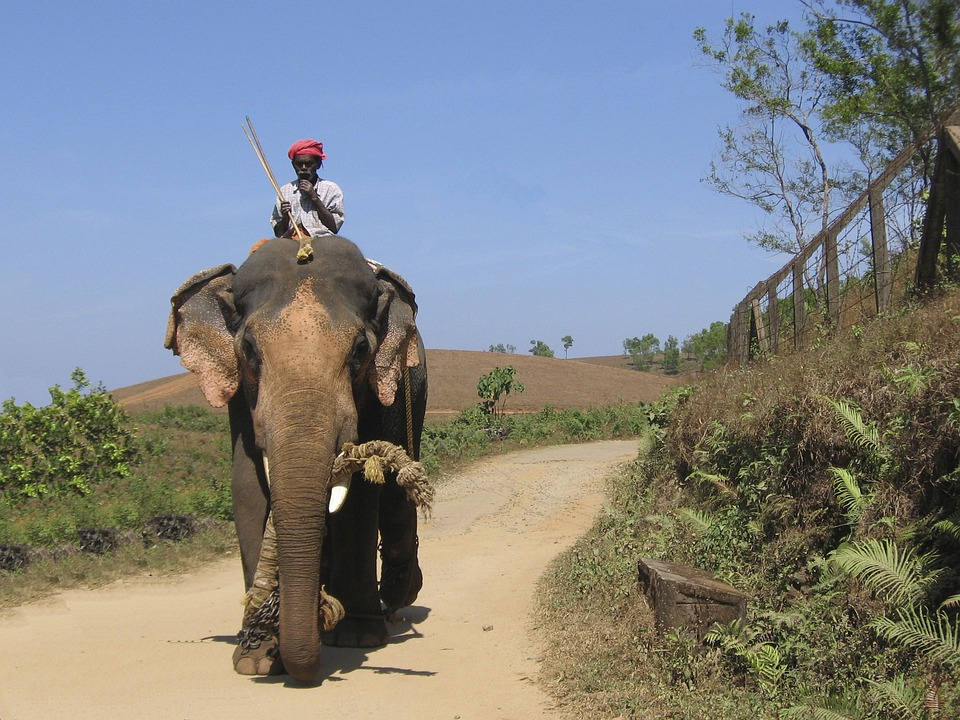 Elephant, India, Aanayum Paappanum, Elephant Driver