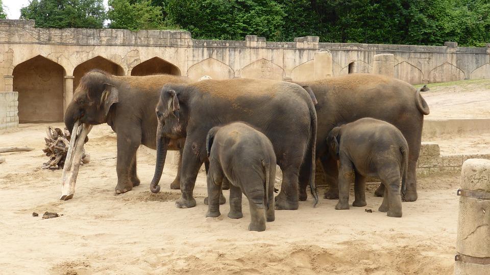 Zoo Hannover, Elephant, Adventure Zoo, Jungle Palace