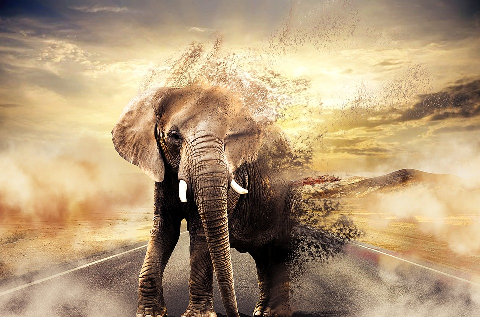 Goodbye, Elephant, Africa, Nature, Trunk, Landscape