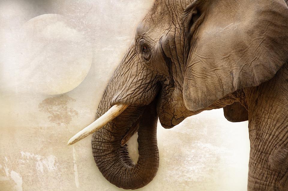 Elephant, Animal, Mammal, Ivory, Africa, Close