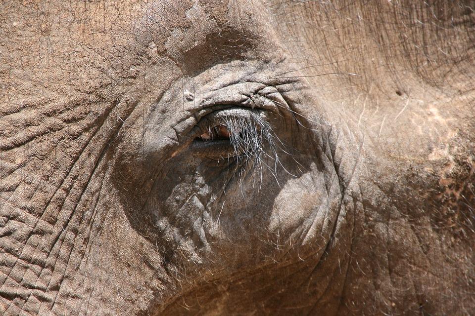 Elephant, Eye, Animal, National Park, Safari, Nature