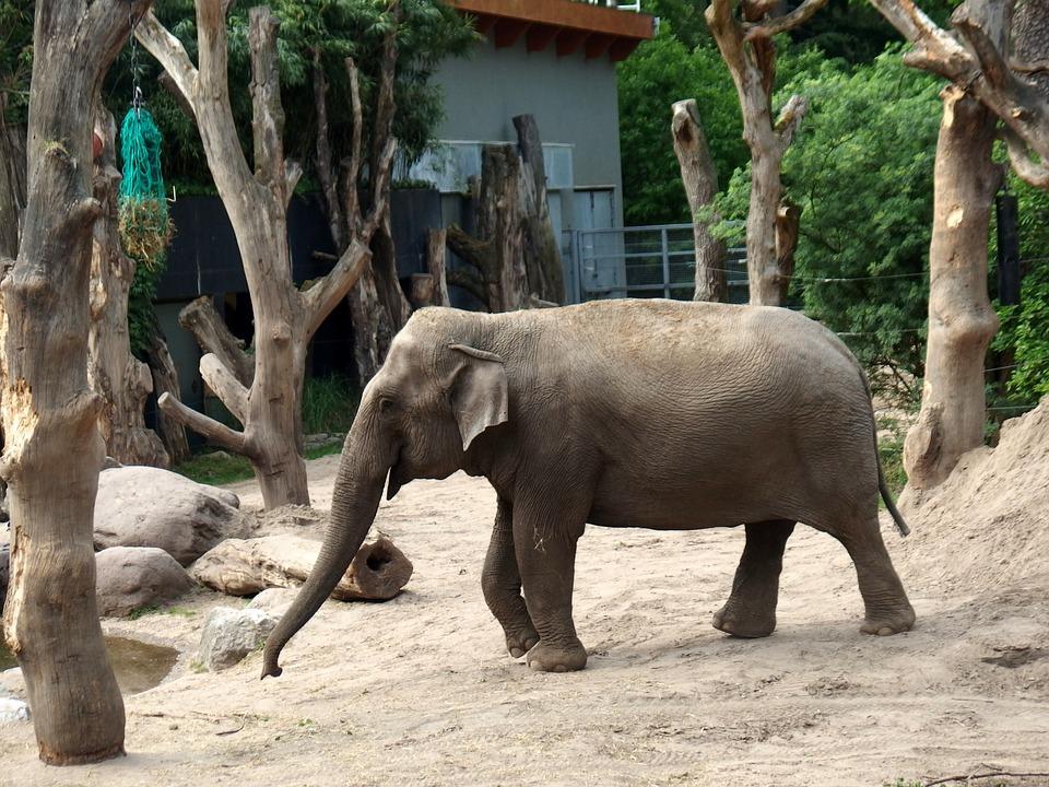 Elephant, Feel Free, Not Free