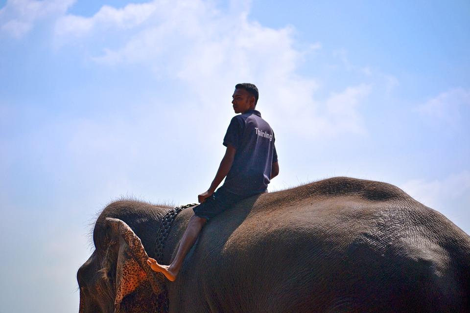 Elephant Ride, Ride On Elephant, Trainer