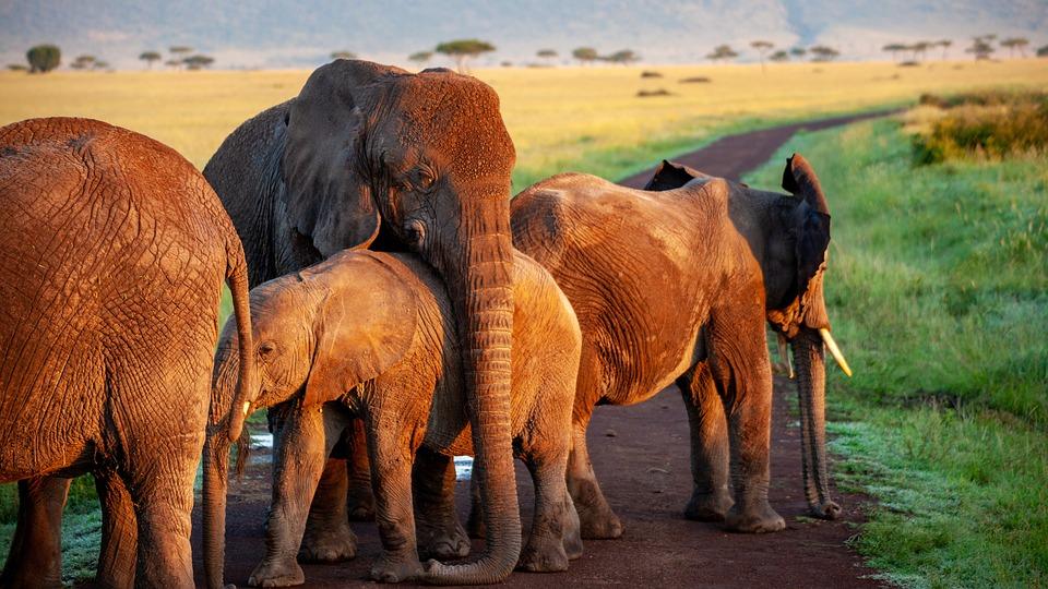 Elephant, Flock, Mother, Africa, Safari, Animals
