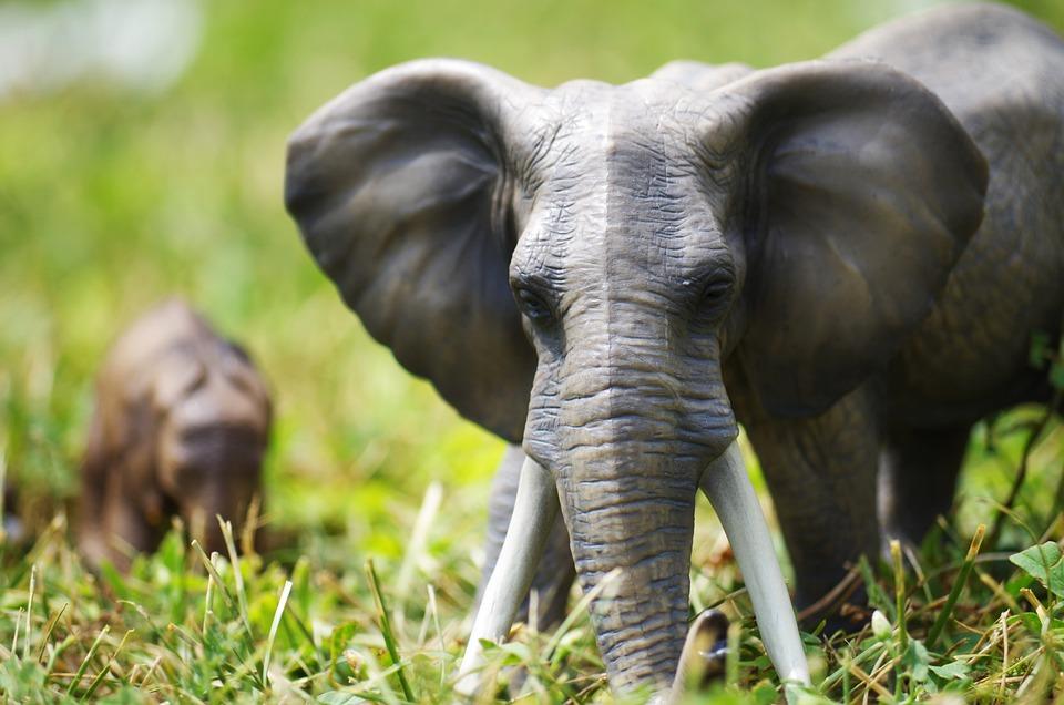 Elephants, Toys, Grass