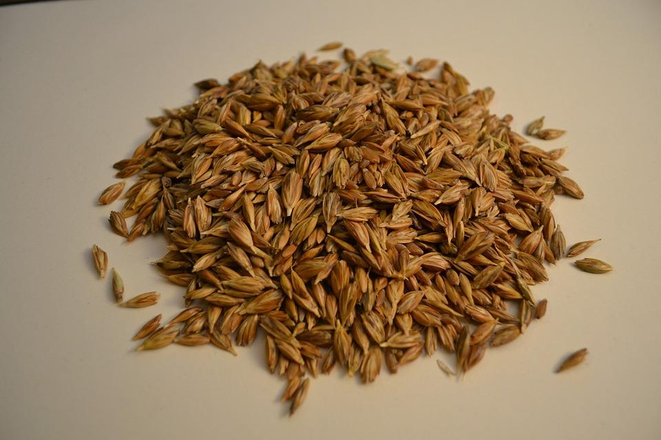 Emmer, Wheat, Grains, Organic