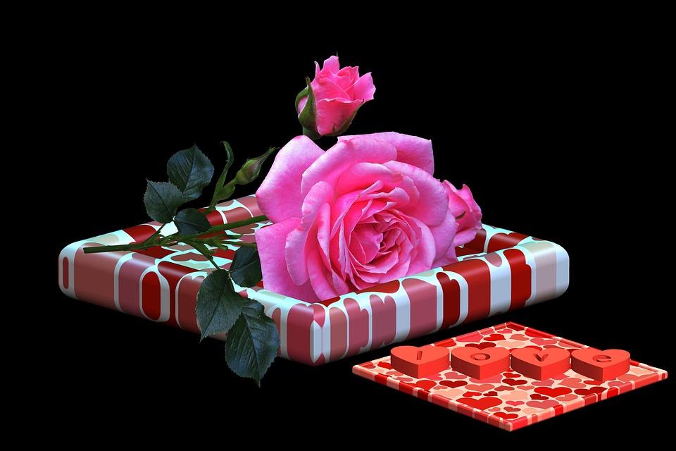 Rosa, Flower, Dedicated, Wishes, Decoration, Emotion