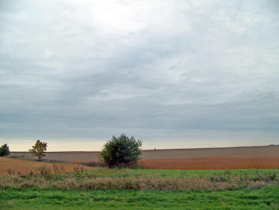 Empty, Field, Bushes, Indiana, Fall, Autumn