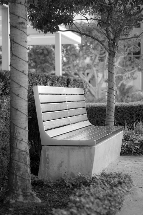 Outdoors, Bench, Wood, Seat, Tree, Nature, Empty