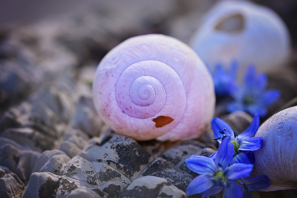 Shell, Empty, Empty Snail Shell, Broken, Damaged