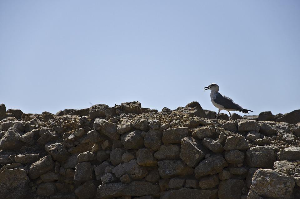 Seagull, Empúries, Rocks, Beach, Stones, Costa Brava