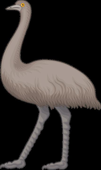 Animal, Australia, Australian, Bird, Emu, Flightless