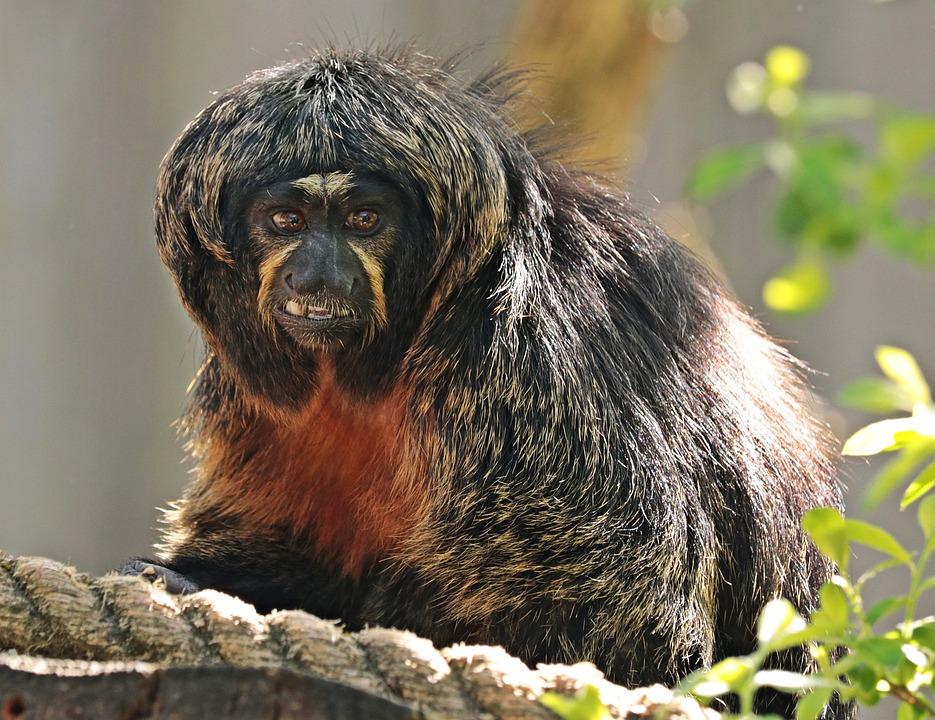 Monkey, Enclosure, Animal World, Zoo, Animal, Primate