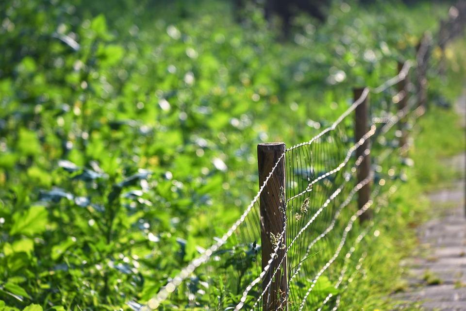 Fence, Wire, Mesh, Post, Barrier, Enclosure, Garden