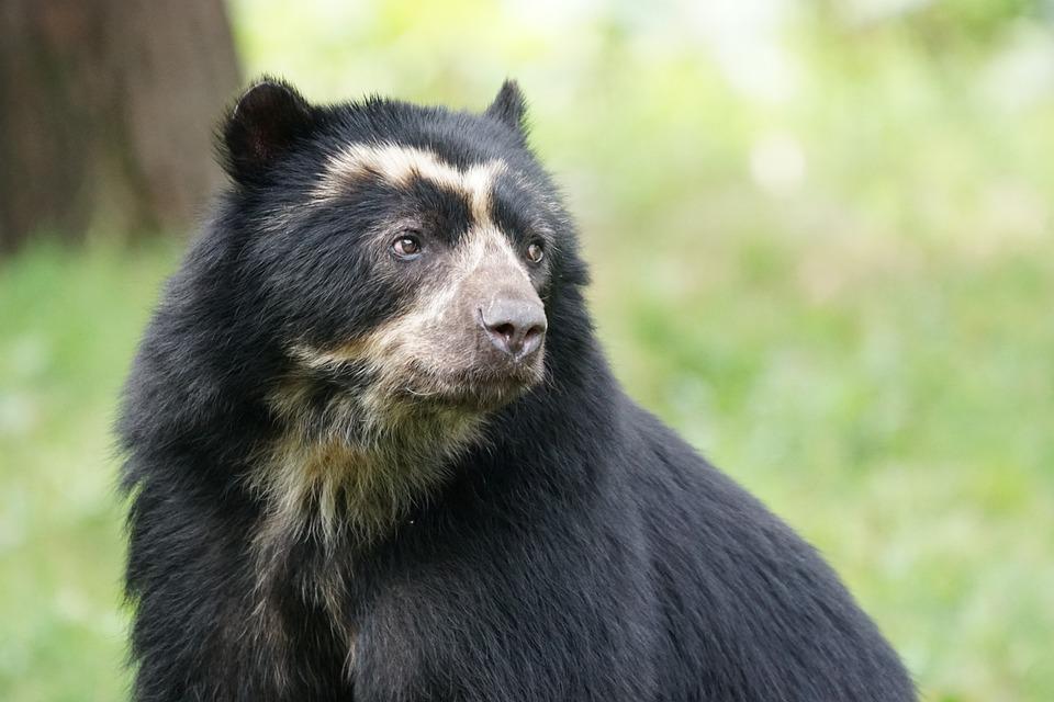 Bear, Mammal, Enclosure