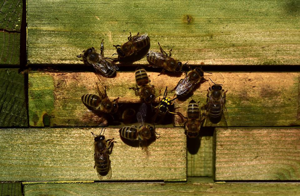 Bees, Beehive, Wasp, Intruder, Enemy, Defend, Input