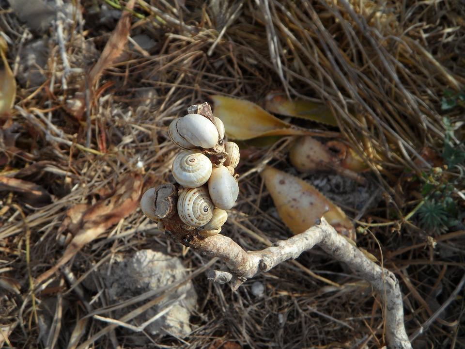 Snails, Shell, Snail Shells, Loading, Eng, Many