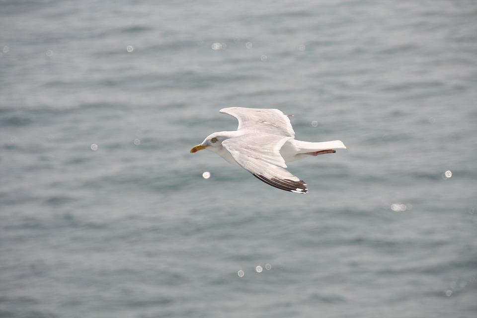 Gulls, Shipping, Ferry, Bird, Port, England, Ship, Fly