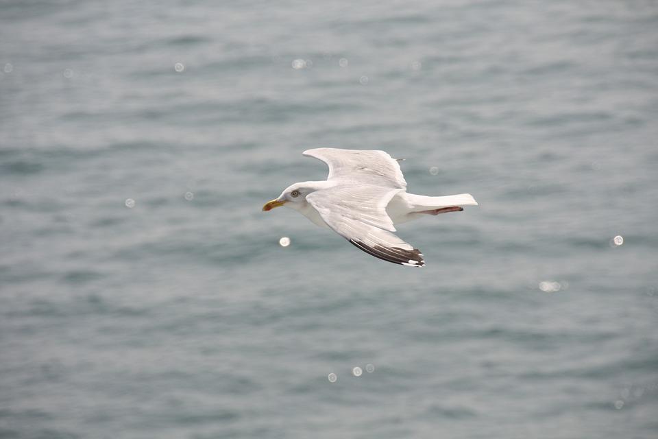 Gulls, Shipping, Ferry, Bird, Port, England, Ship, Fly