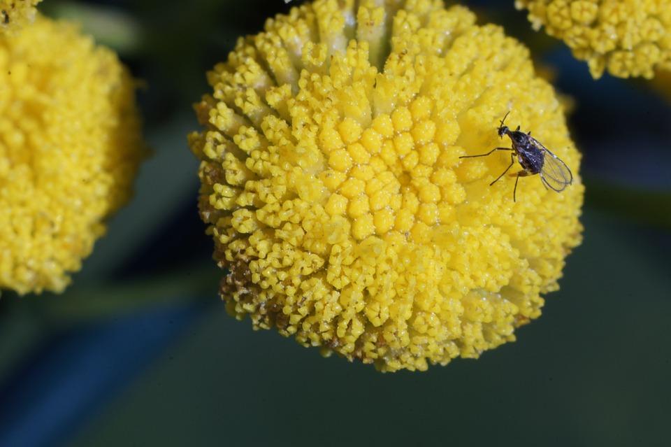 Flower, Fly, Petals, Insect, Bug, Entomology, Garden