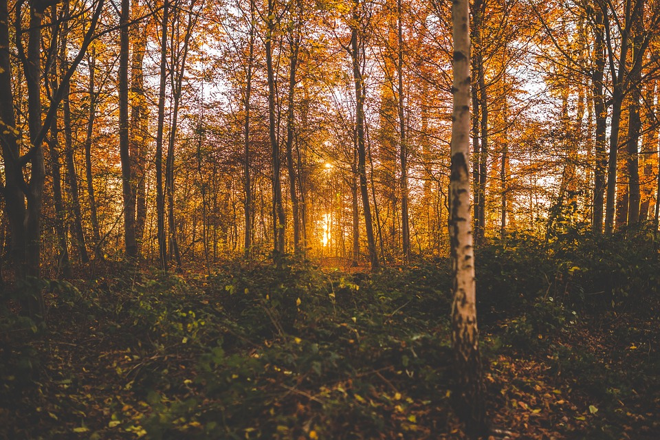 Autumn, Dried Leaves, Environment, Fall, Forest