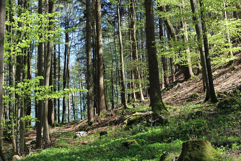 Trees, Forest, Nature, Forest Trees, Environment