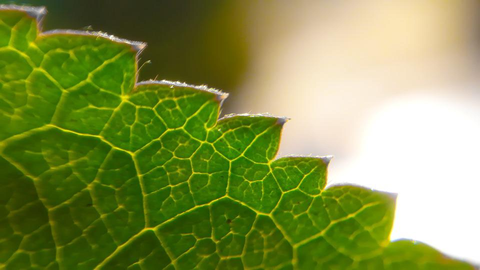 Leaf, Nature, Flora, Environment, Growth, Outdoors