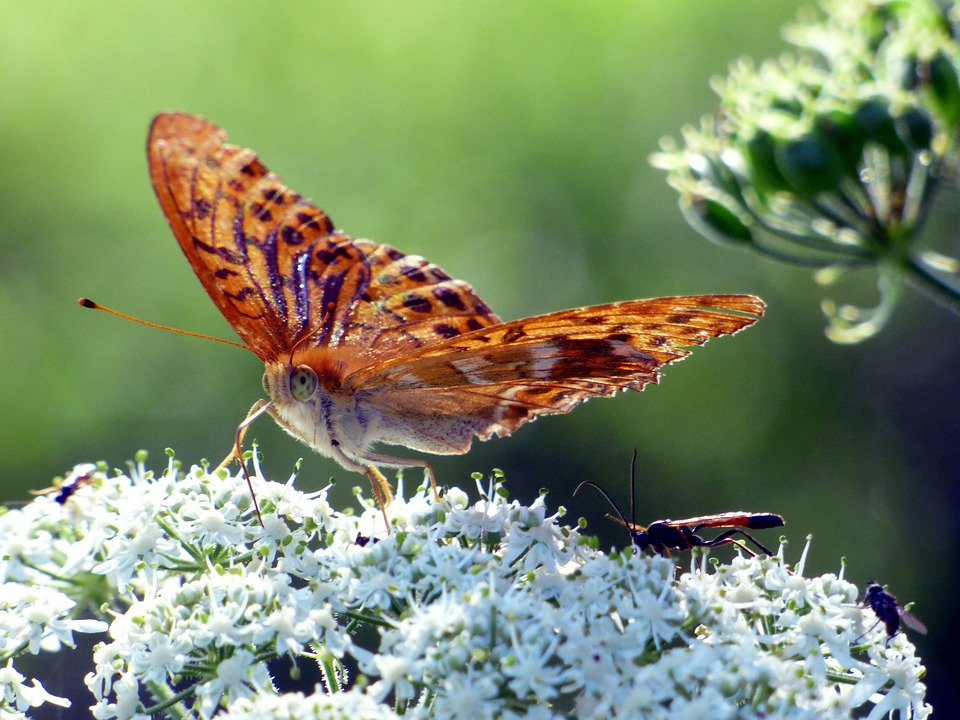 Flower, Leaves, Butterfly, Nature, Environment, Floral