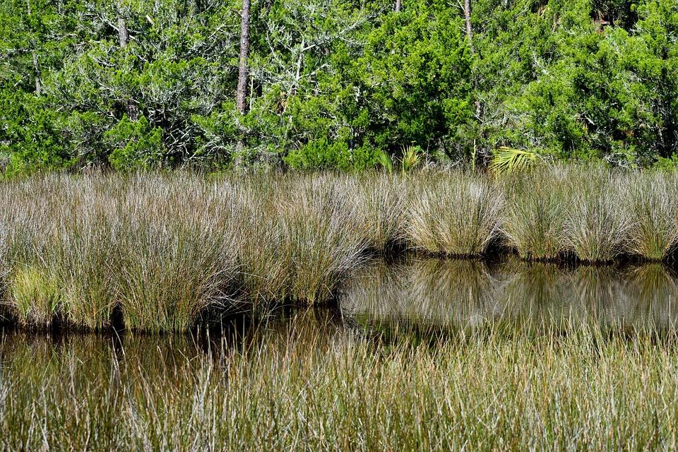 Marshland, Swamp, Environment, Landscape, Nature