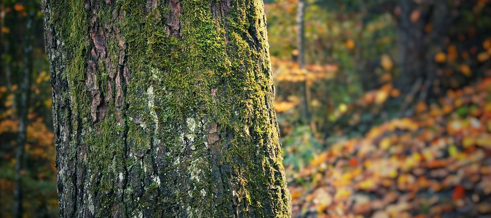 Tree, Nature, Trunk, Park, Forest, Environment