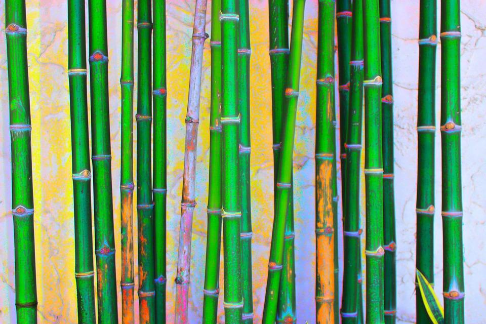Bamboo, Green, Nature, Plant, Garden, Environment