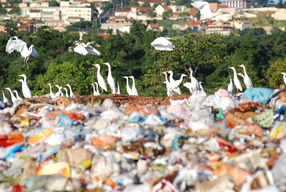 The Dump, Environment, Society